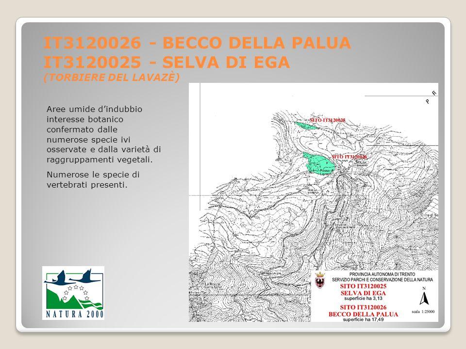 IT3120026 - BECCO DELLA PALUA IT3120025 - SELVA DI EGA (TORBIERE DEL LAVAZÈ) Aree umide dindubbio interesse botanico confermato dalle numerose specie