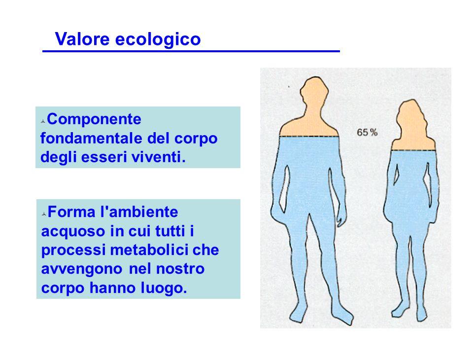 Componente fondamentale del corpo degli esseri viventi. Forma l'ambiente acquoso in cui tutti i processi metabolici che avvengono nel nostro corpo han