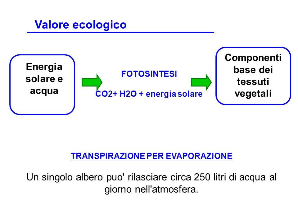 TRANSPIRAZIONE PER EVAPORAZIONE Un singolo albero puo' rilasciare circa 250 litri di acqua al giorno nell'atmosfera. Energia solare e acqua FOTOSINTES