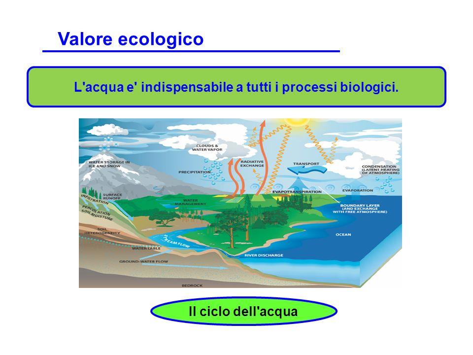 L'acqua e' indispensabile a tutti i processi biologici. Il ciclo dell'acqua. Valore ecologico