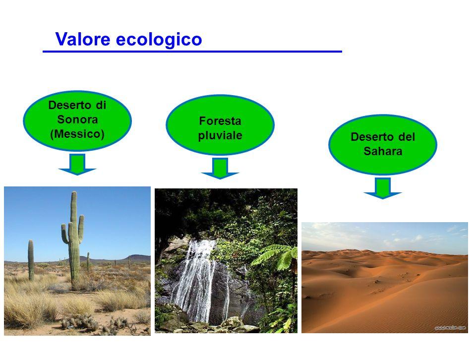Deserto di Sonora (Messico) Foresta pluviale Deserto del Sahara Valore ecologico