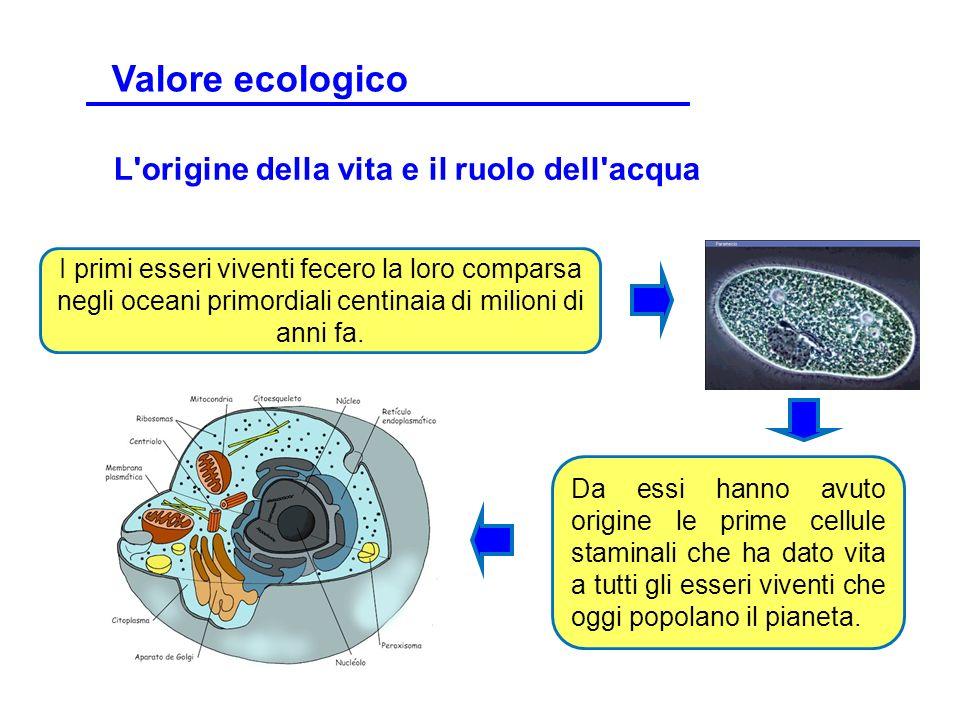 L'origine della vita e il ruolo dell'acqua I primi esseri viventi fecero la loro comparsa negli oceani primordiali centinaia di milioni di anni fa. Da