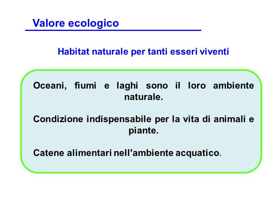 Habitat naturale per tanti esseri viventi Oceani, fiumi e laghi sono il loro ambiente naturale. Condizione indispensabile per la vita di animali e pia