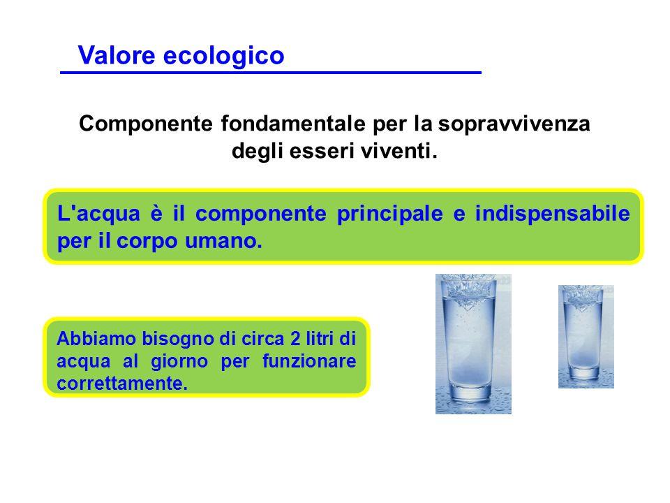 L'acqua è il componente principale e indispensabile per il corpo umano. Componente fondamentale per la sopravvivenza degli esseri viventi. Abbiamo bis