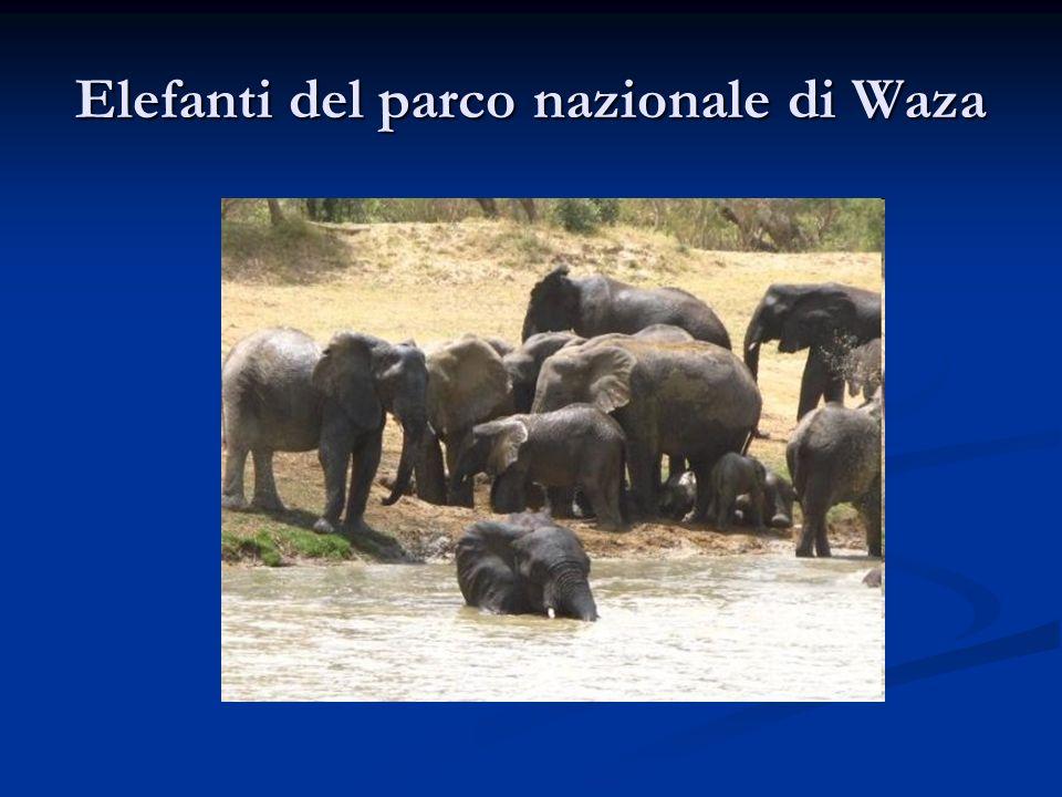 Elefanti del parco nazionale di Waza