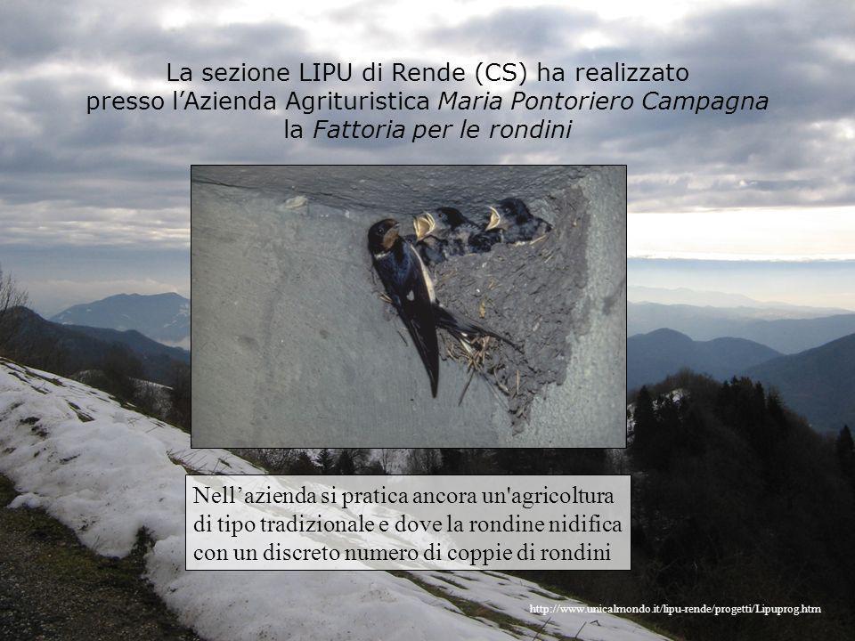La sezione LIPU di Rende (CS) ha realizzato presso lAzienda Agrituristica Maria Pontoriero Campagna la Fattoria per le rondini http://www.unicalmondo.