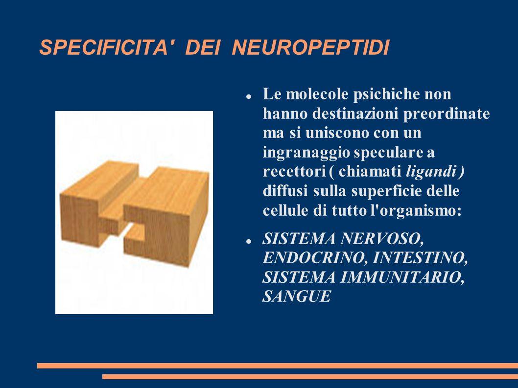 SPECIFICITA' DEI NEUROPEPTIDI Le molecole psichiche non hanno destinazioni preordinate ma si uniscono con un ingranaggio speculare a recettori ( chiam