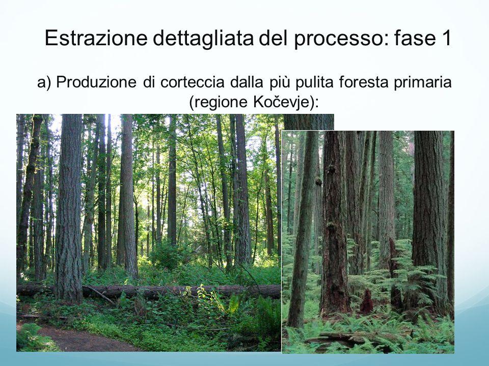 Estrazione dettagliata del processo: fase 1 a) Produzione di corteccia dalla più pulita foresta primaria (regione Kočevje):