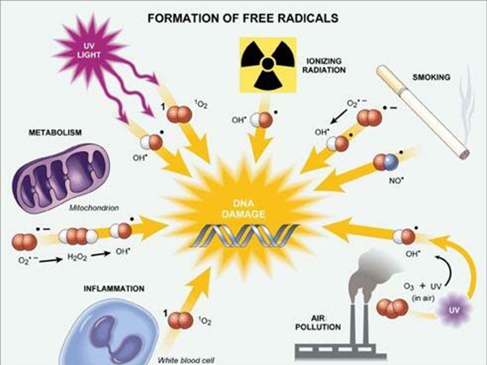 Produttore intercellulare aggiuntivo di radicali liberi è lossigeno: Paradosso dellossigeno, Davies K.J.A.1995 Lossigeno è essenziale per la vita aerobica Lossigeno è tossico, mutageno e stimolo della morte delle cellule I radicali liberi che vengono prodotti durante il metabolismo cellulare, agiscono su: Lipidi DNA Proteine Carboidrati
