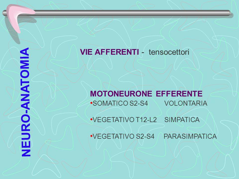 VIE AFFERENTI - tensocettori MOTONEURONE EFFERENTE SOMATICO S2-S4 VOLONTARIA VEGETATIVO T12-L2 SIMPATICA VEGETATIVO S2-S4 PARASIMPATICA NEURO-ANATOMIA