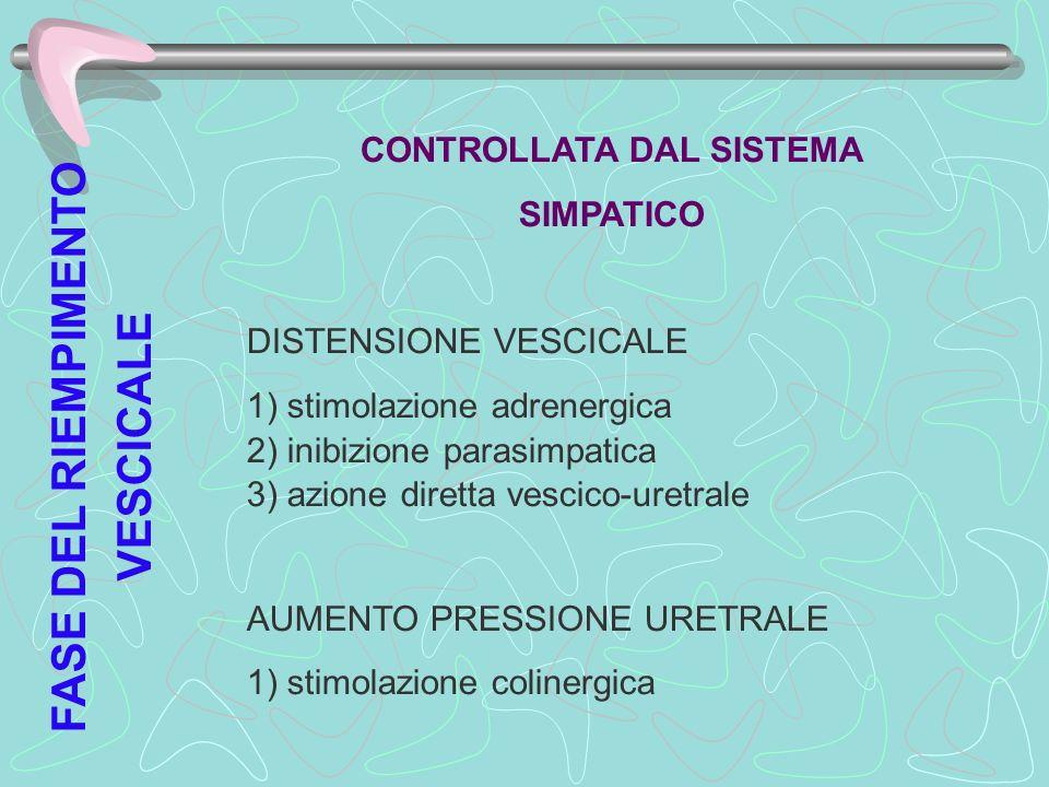 FASE DEL RIEMPIMENTO VESCICALE CONTROLLATA DAL SISTEMA SIMPATICO DISTENSIONE VESCICALE 1) stimolazione adrenergica 2) inibizione parasimpatica 3) azio