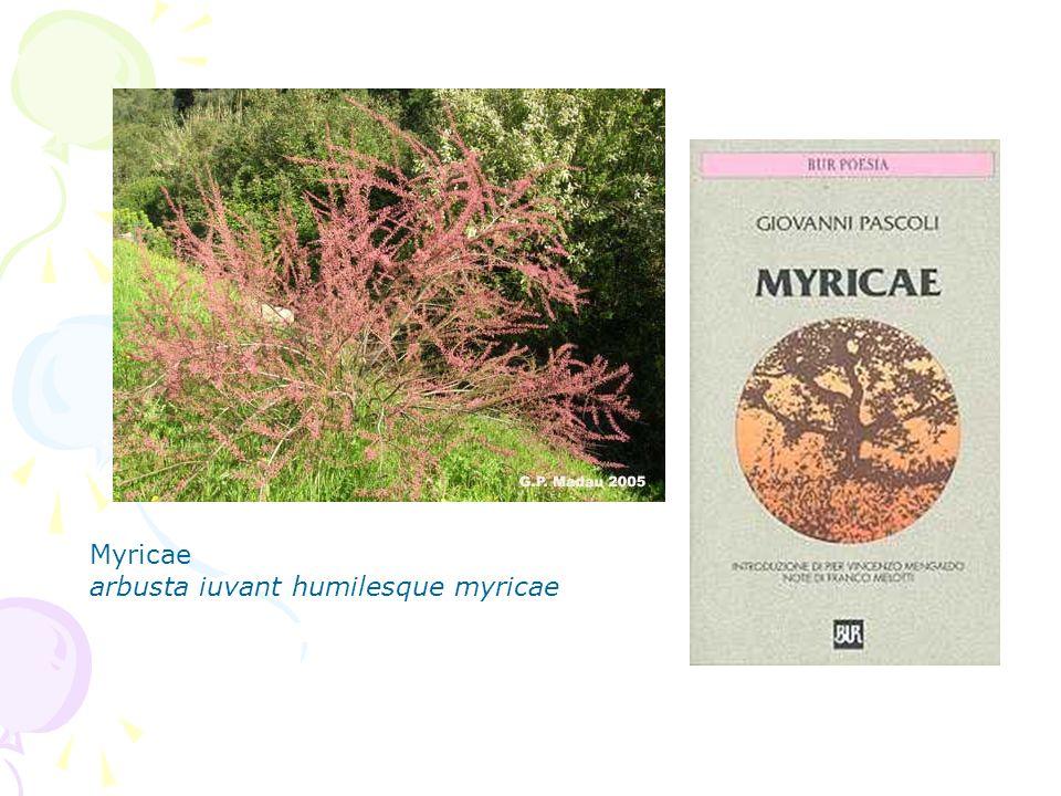Myricae arbusta iuvant humilesque myricae