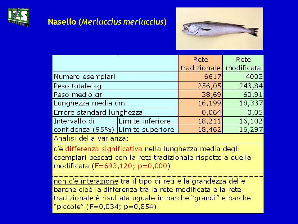 Per quantificare e valutare il rendimento della rete modificata sono state effettuate biometrie sul pescato di entrambi i pescherecci: E stato inoltre