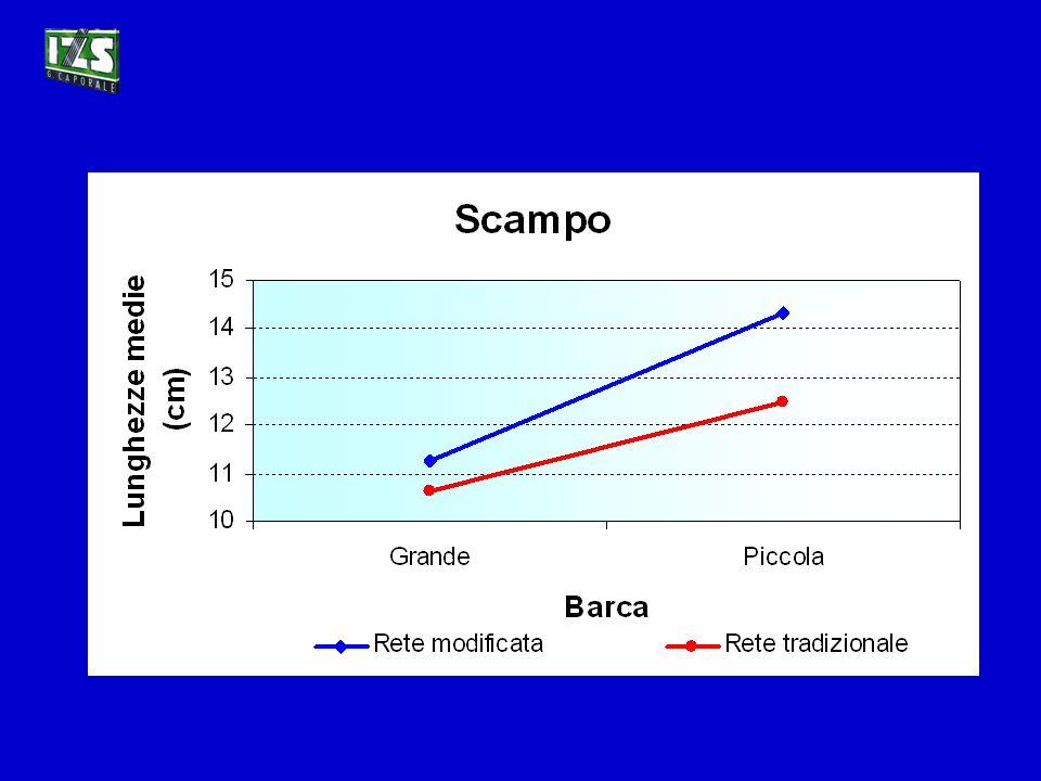 Scampo (Nephrops norvegicus)
