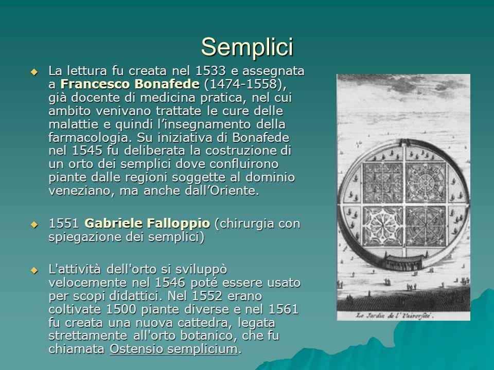 Semplici La lettura fu creata nel 1533 e assegnata a Francesco Bonafede (1474-1558), già docente di medicina pratica, nel cui ambito venivano trattate