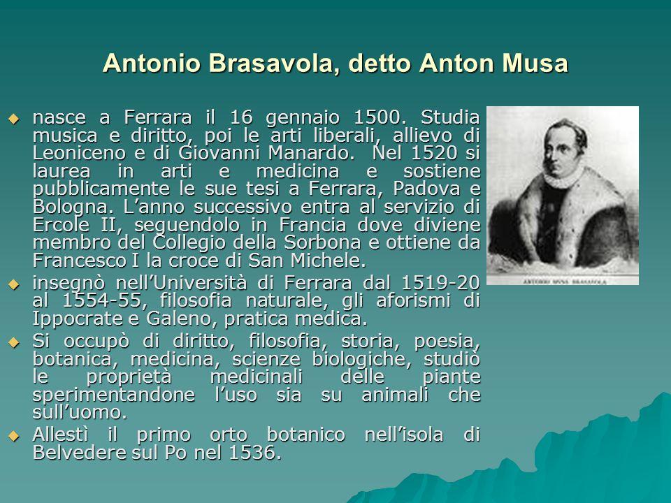Antonio Brasavola, detto Anton Musa nasce a Ferrara il 16 gennaio 1500. Studia musica e diritto, poi le arti liberali, allievo di Leoniceno e di Giova