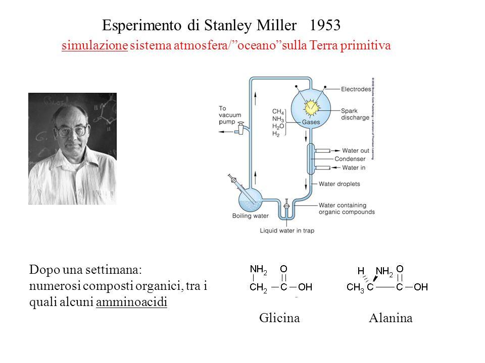 Esperimento di Stanley Miller 1953 simulazione sistema atmosfera/oceanosulla Terra primitiva Dopo una settimana: numerosi composti organici, tra i qua