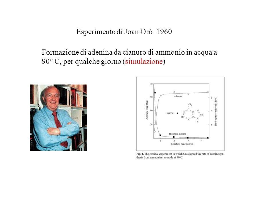 Esperimento di Joan Orò 1960 Formazione di adenina da cianuro di ammonio in acqua a 90° C, per qualche giorno (simulazione)