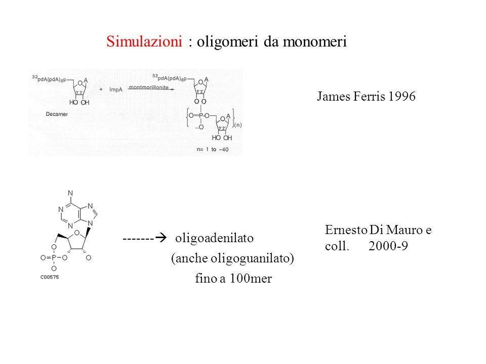 Simulazioni : oligomeri da monomeri ------- oligoadenilato (anche oligoguanilato) James Ferris 1996 Ernesto Di Mauro e coll. 2000-9 fino a 100mer
