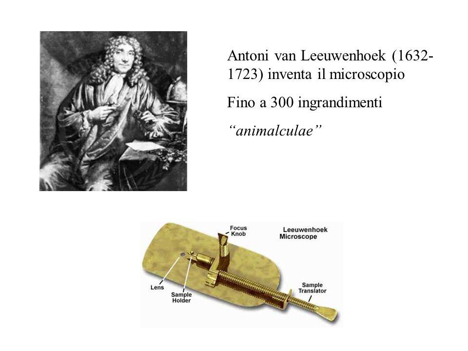 Antoni van Leeuwenhoek (1632- 1723) inventa il microscopio Fino a 300 ingrandimenti animalculae