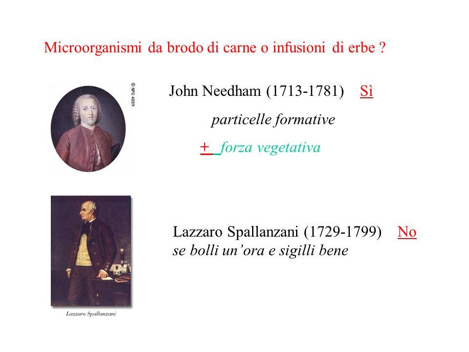 Microorganismi da brodo di carne o infusioni di erbe ? John Needham (1713-1781) Sì particelle formative + forza vegetativa Lazzaro Spallanzani (1729-1