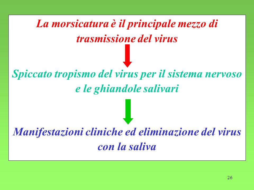 26 La morsicatura è il principale mezzo di trasmissione del virus Spiccato tropismo del virus per il sistema nervoso e le ghiandole salivari Manifesta