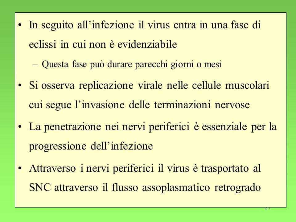 27 In seguito allinfezione il virus entra in una fase di eclissi in cui non è evidenziabile –Questa fase può durare parecchi giorni o mesi Si osserva