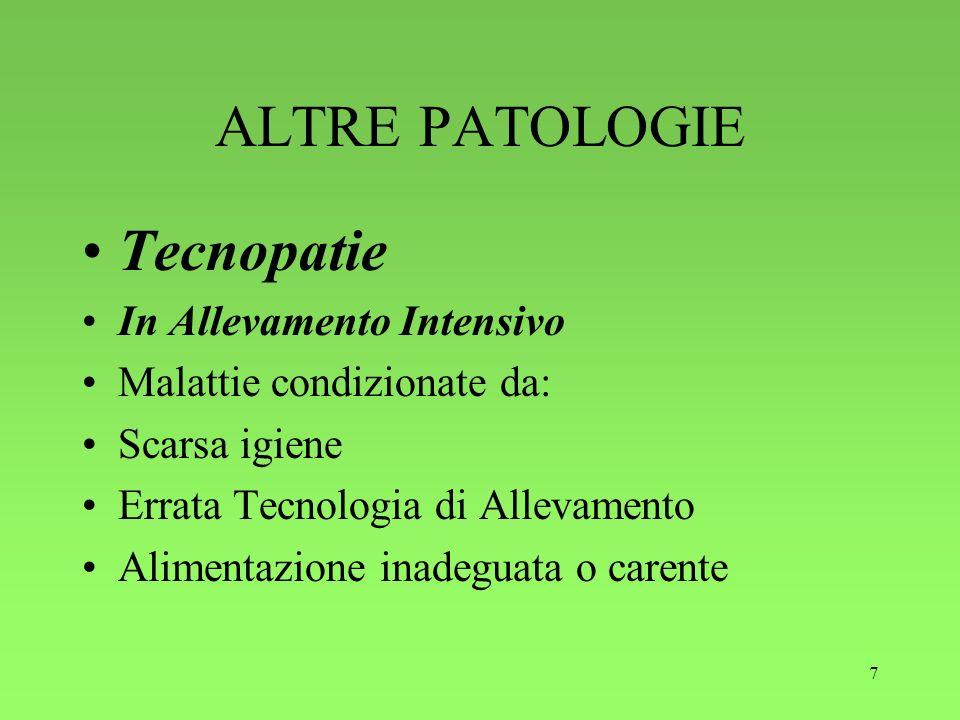 7 ALTRE PATOLOGIE Tecnopatie In Allevamento Intensivo Malattie condizionate da: Scarsa igiene Errata Tecnologia di Allevamento Alimentazione inadeguat