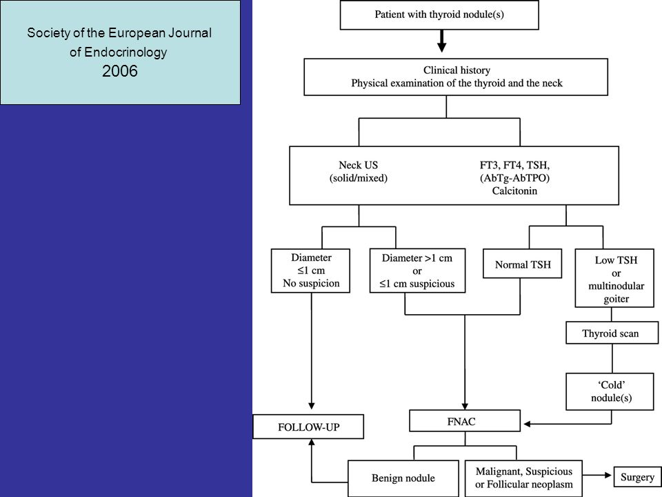 Society of the European Journal of Endocrinology 2006