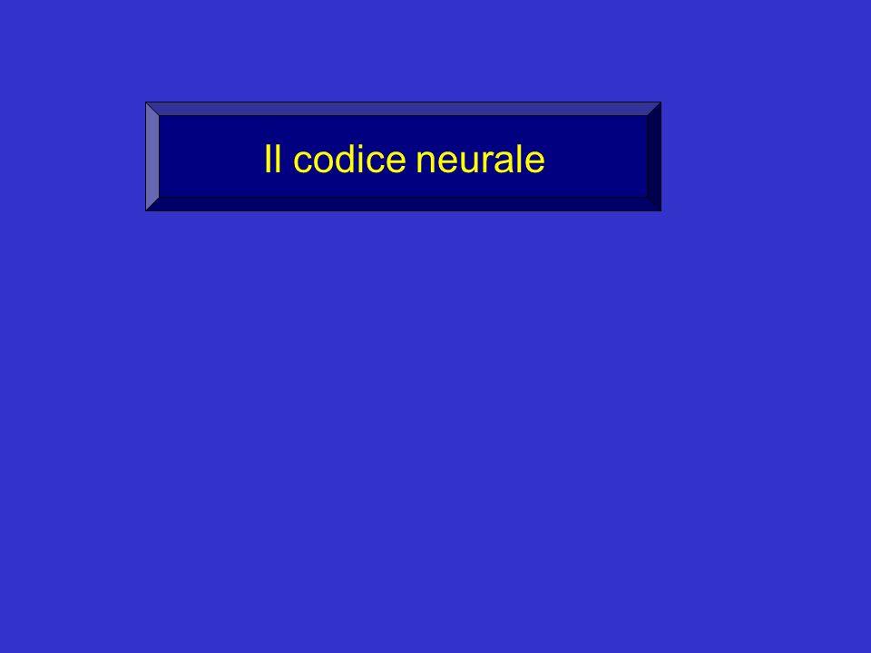 1 o problema: COME VIENE GENERATO IL CODICE NEURONALE.