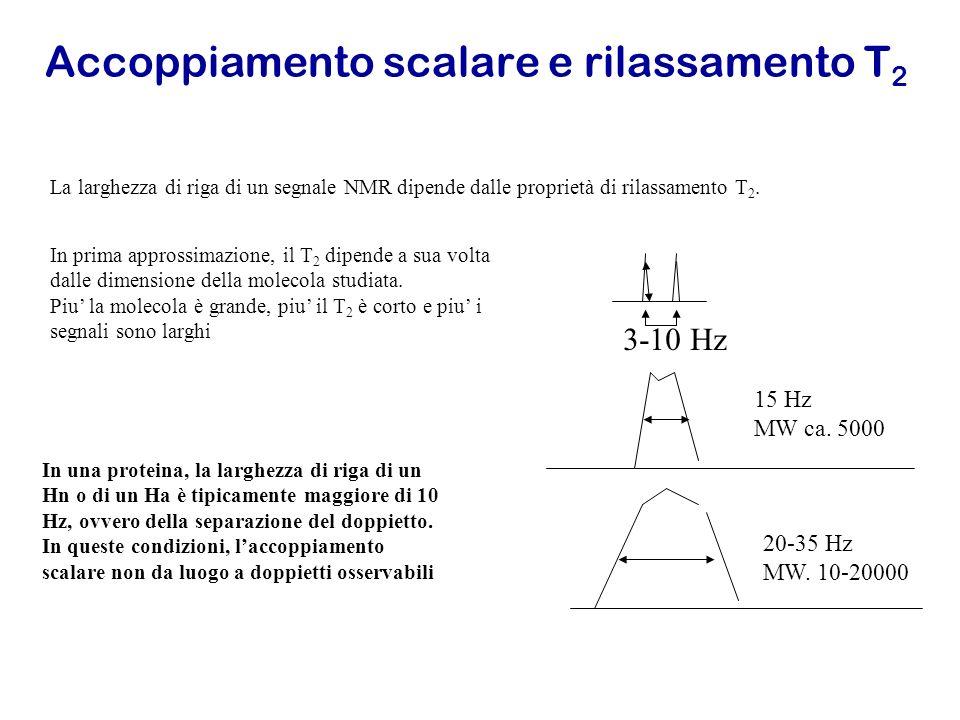 Accoppiamento scalare e rilassamento T 2 La larghezza di riga di un segnale NMR dipende dalle proprietà di rilassamento T 2. In prima approssimazione,