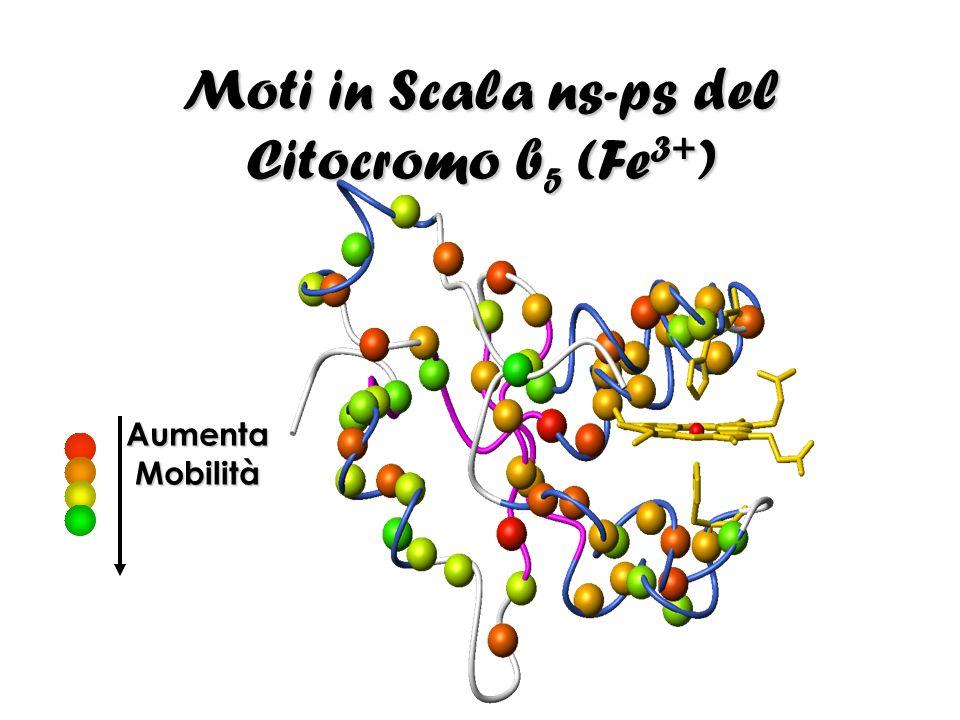 Moti in Scala ns-ps del Citocromo b 5 (Fe 3+ ) Aumenta Mobilità