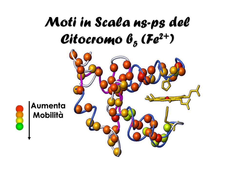 Moti in Scala ns-ps del Citocromo b 5 (Fe 2+ ) Aumenta Mobilità