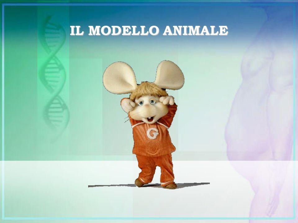 IL MODELLO ANIMALE