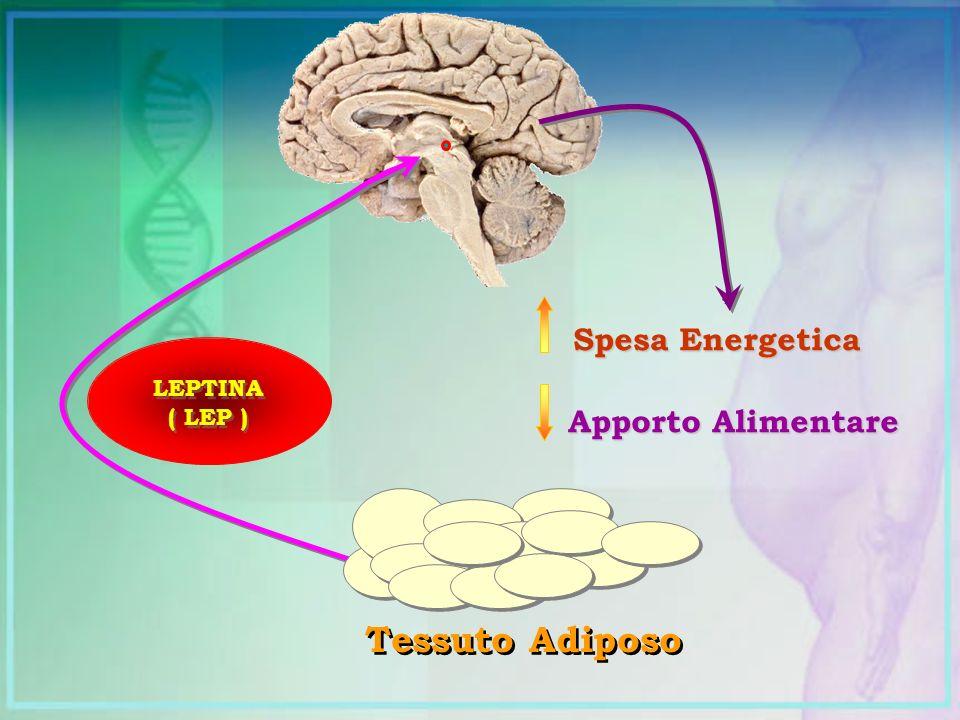 Spesa Energetica Apporto Alimentare LEPTINA ( LEP ) LEPTINA ( LEP ) Tessuto Adiposo