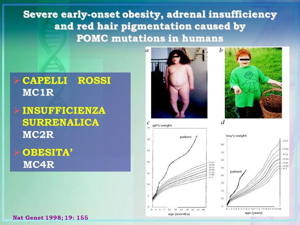 CAPELLI ROSSI MC1R INSUFFICIENZA SURRENALICA MC2R OBESITA MC4R Nat Genet 1998; 19: 155 Severe early-onset obesity, adrenal insufficiency and red hair