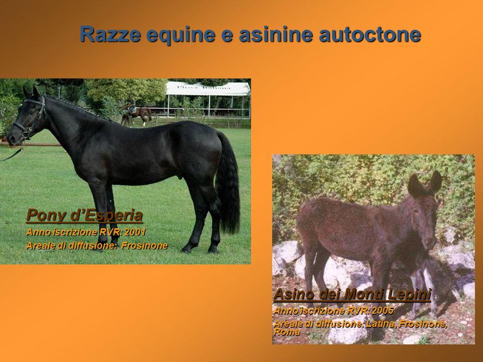 Asino dei Monti Lepini Anno iscrizione RVR: 2005 Areale di diffusione: Latina, Frosinone, Roma Pony dEsperia Anno iscrizione RVR: 2001 Areale di diffu