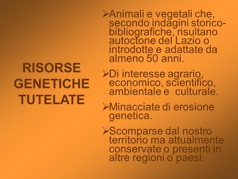 RISORSE GENETICHE TUTELATE Animali e vegetali che, secondo indagini storico- bibliografiche, risultano autoctone del Lazio o introdotte e adattate da