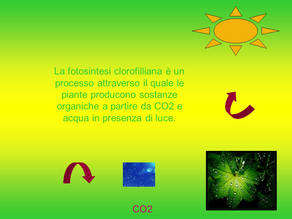 La fotosintesi clorofilliana è un processo attraverso il quale le piante producono sostanze organiche a partire da CO2 e acqua in presenza di luce.