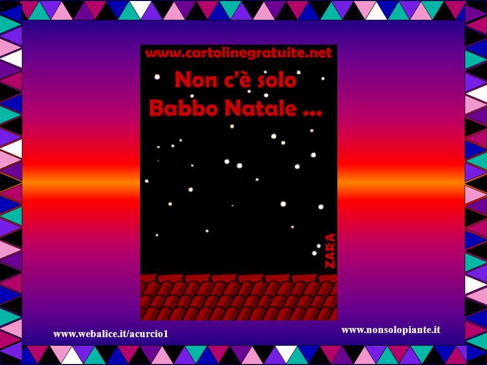 www.nonsolopiante.it www.webalice.it/acurcio1