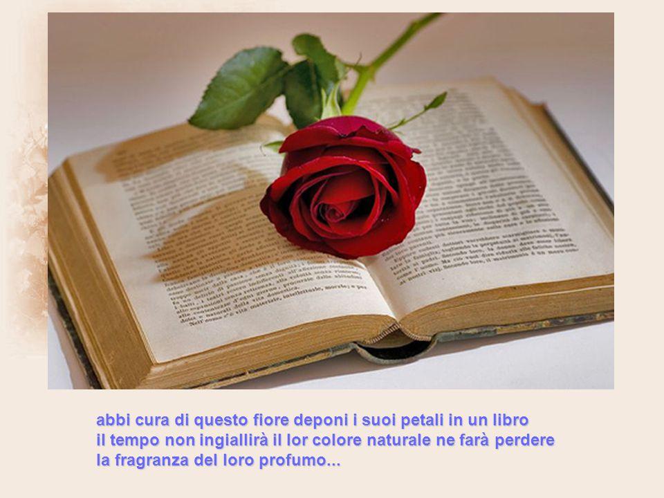 abbi cura di questo fiore deponi i suoi petali in un libro il tempo non ingiallirà il lor colore naturale ne farà perdere la fragranza del loro profumo...