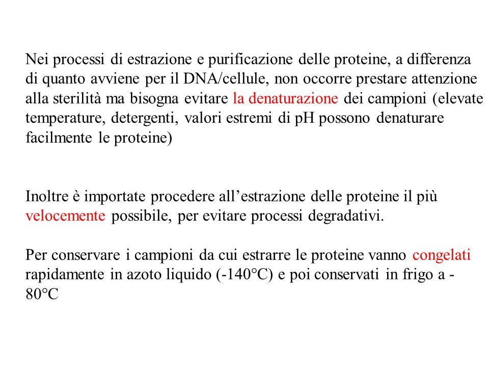 Nei processi di estrazione e purificazione delle proteine, a differenza di quanto avviene per il DNA/cellule, non occorre prestare attenzione alla ste