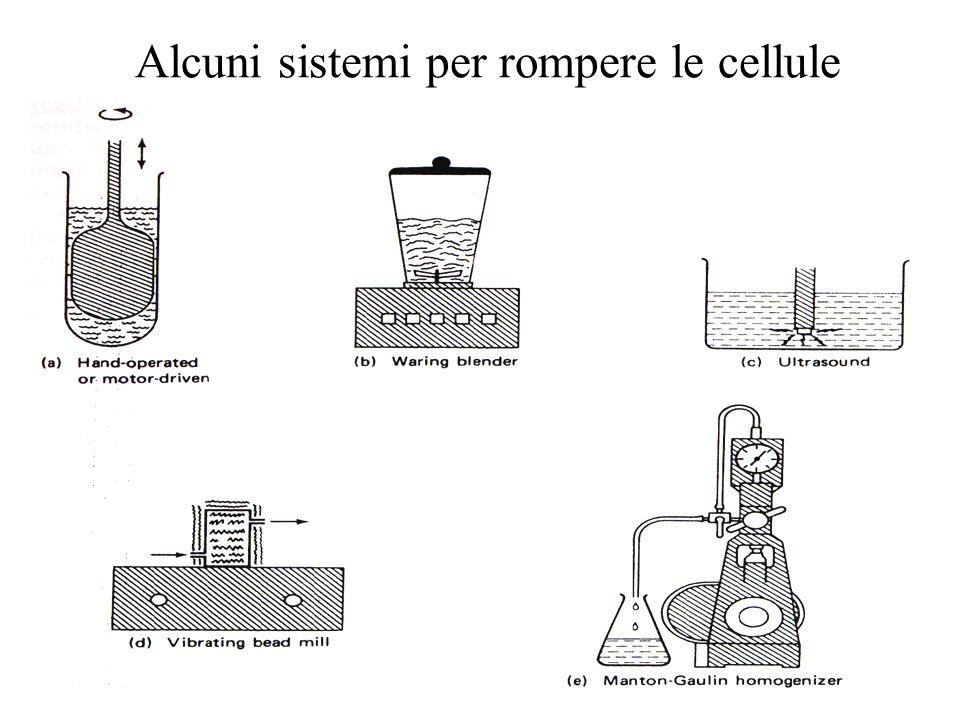 Alcuni sistemi per rompere le cellule