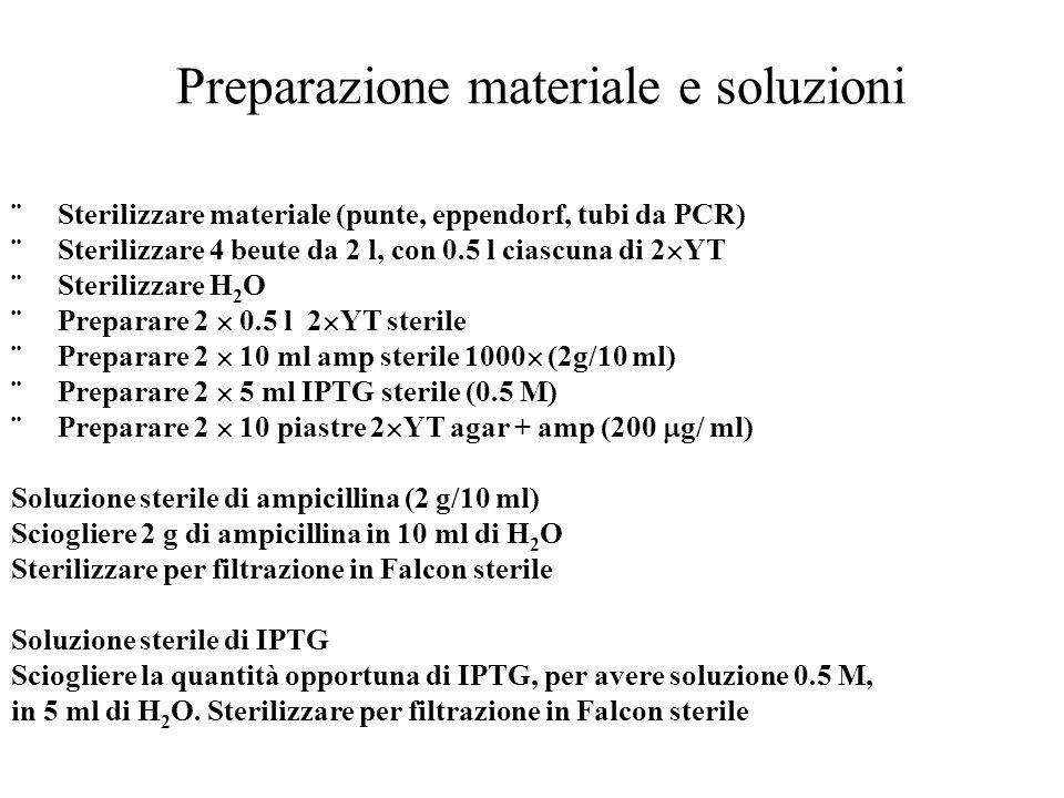 Preparazione materiale e soluzioni  Sterilizzare materiale (punte, eppendorf, tubi da PCR)  Sterilizzare 4 beute da 2 l, con 0.5 l ciascuna di 2  Y