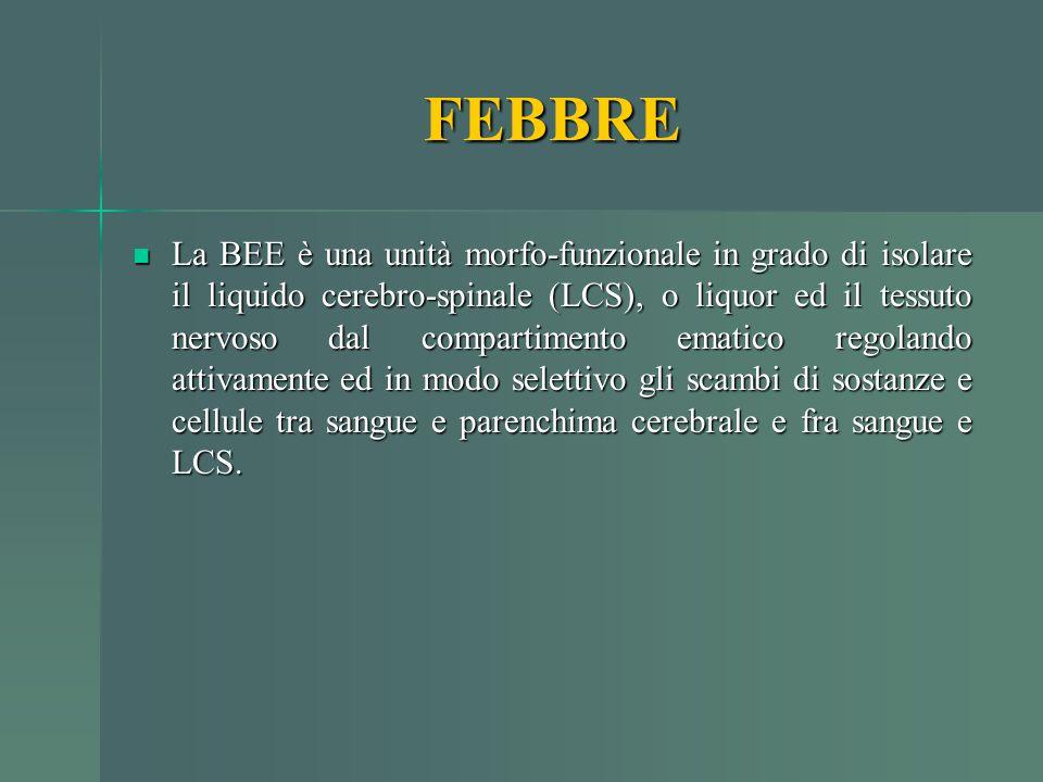 FEBBRE La BEE è una unità morfo-funzionale in grado di isolare il liquido cerebro-spinale (LCS), o liquor ed il tessuto nervoso dal compartimento emat