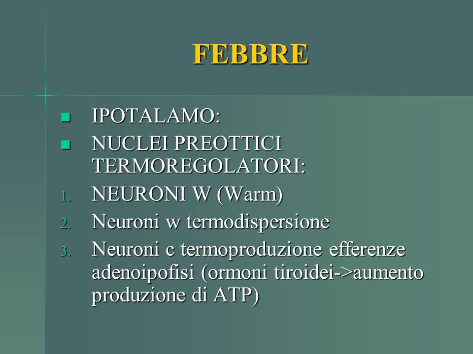 FEBBRE IPOTALAMO: IPOTALAMO: NUCLEI PREOTTICI TERMOREGOLATORI: NUCLEI PREOTTICI TERMOREGOLATORI: 1. NEURONI W (Warm) 2. Neuroni w termodispersione 3.