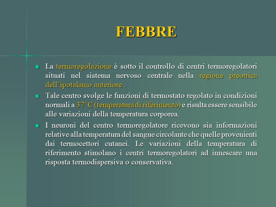 La termoregolazione è sotto il controllo di centri termoregolatori situati nel sistema nervoso centrale nella regione preottica dell'ipotalamo anterio