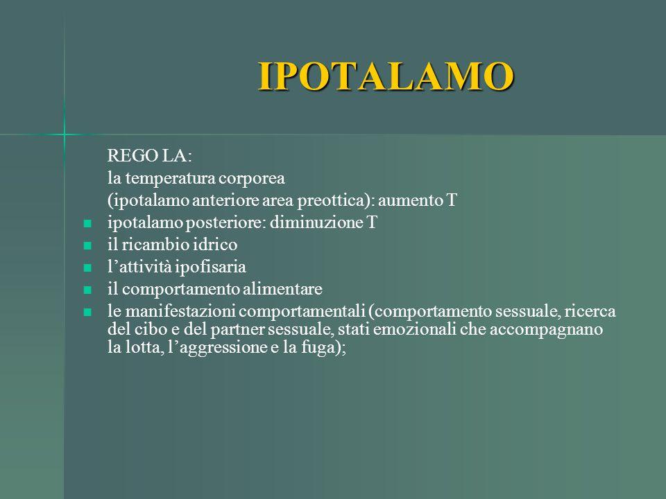 IPOTALAMO REGO LA: la temperatura corporea (ipotalamo anteriore area preottica): aumento T ipotalamo posteriore: diminuzione T il ricambio idrico l'at