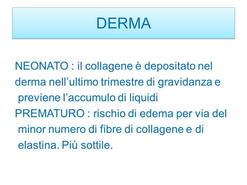 TESSUTO SOTTOCUTANEO NEONATO : il tess.adiposo ha la funzione di isolante termico e serbatoio calorico.