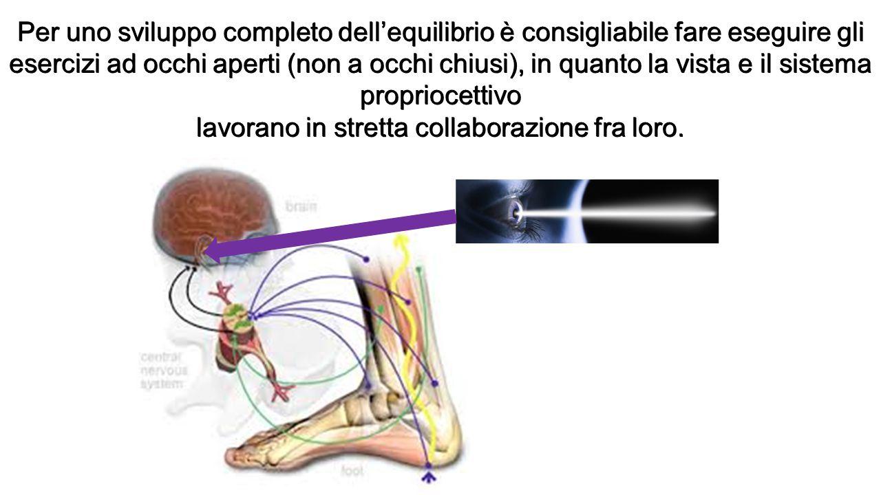 Per uno sviluppo completo dell'equilibrio è consigliabile fare eseguire gli esercizi ad occhi aperti (non a occhi chiusi), in quanto la vista e il sis